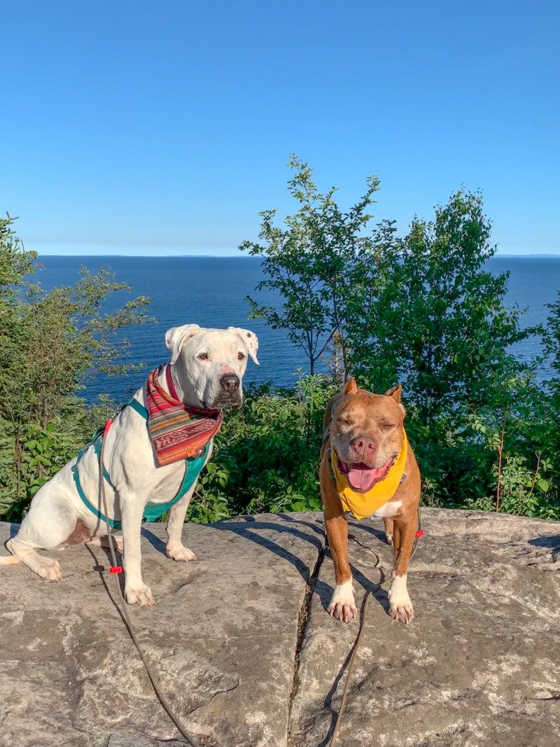 A white dog and a brown dog perched on a rock surrounded by trees, overlooking Lake Superior behind them in the Split Rock Lighthouse State Park.