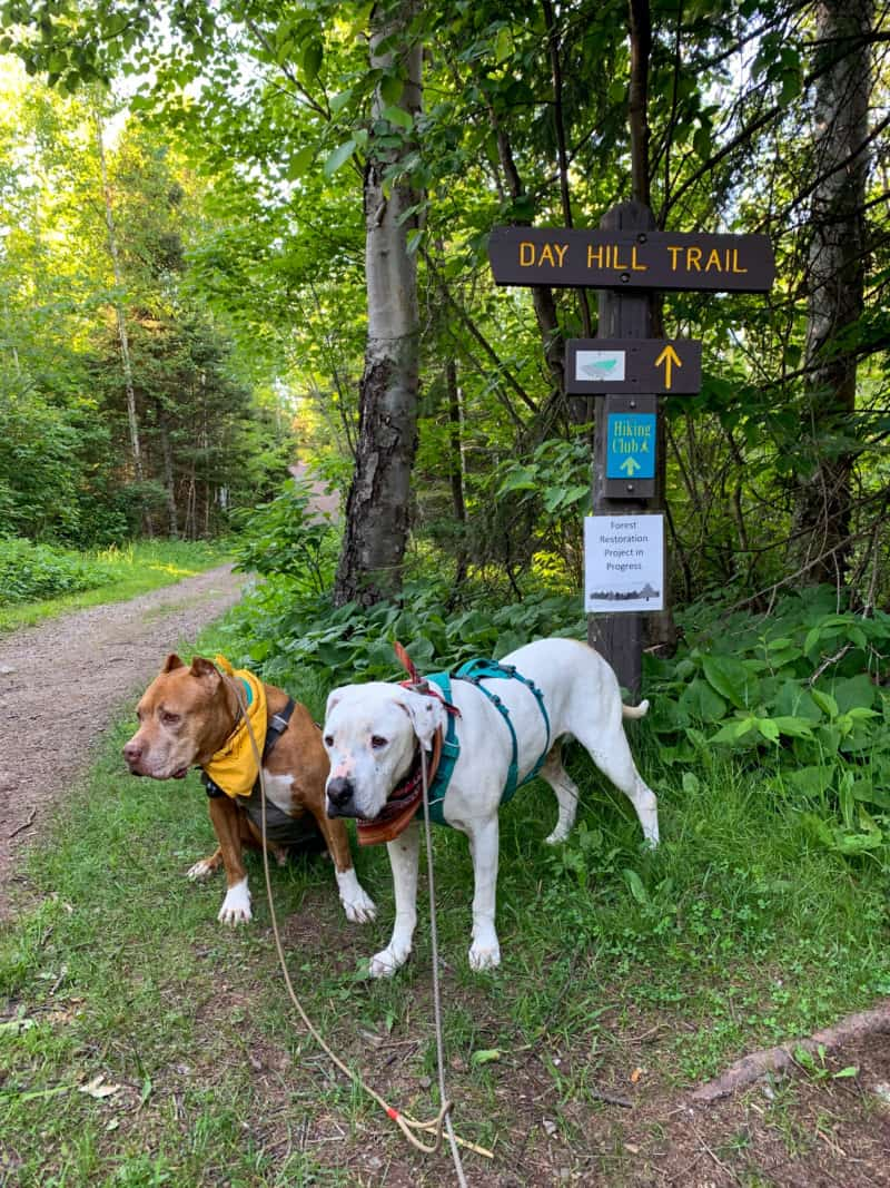 A brown dog and a white dog standing in front of the Day Hill Trail sign overlooking the trail and the forest behind them at Split Rock Lighthouse State Park in Minnesota.