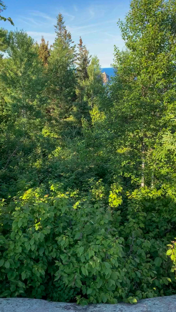 Green trees with a gap between some that is barely low enough to see far into the distance The lighthouse of Split Rock and Lake Superior