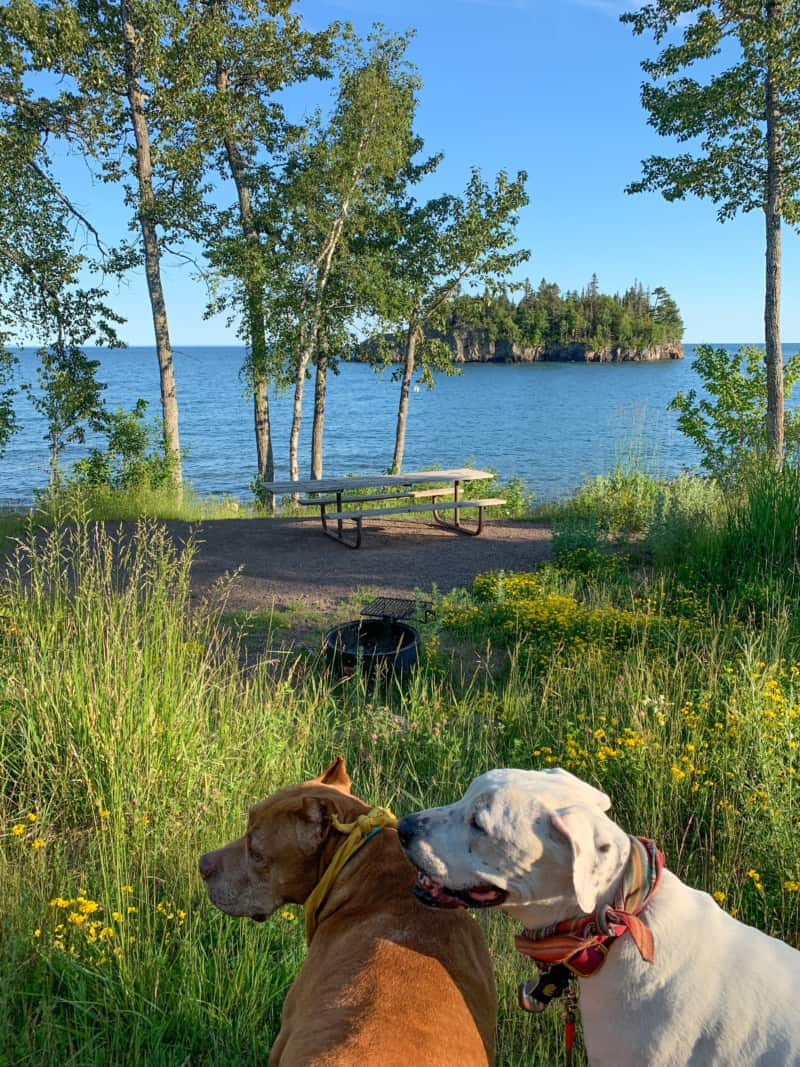 A brown dog and a white dog near the picnic area in front of Lake Superior in Split Rock Lighthouse State Park;  a wooded island can be seen in the distance.