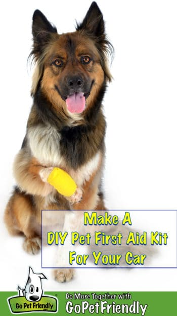 German Shepherd with a bandage on the paw
